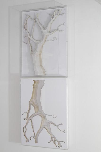 , 'Amazon tree (positive - negative),' 2016, Max Estrella