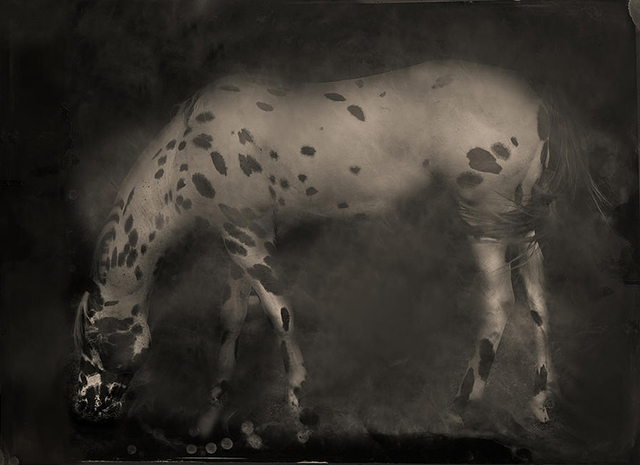 Keith Carter, 'Leopard Appaloosa', 2014, PDNB Gallery
