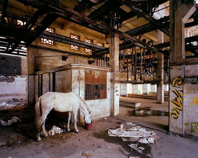 ", '""Mirage"" Slaughterhouse, Casablanca Morocco,' 2014, Podbielski"