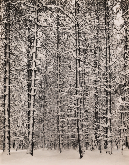 , 'Trees and Snow,' 1933, Seagrave Gallery