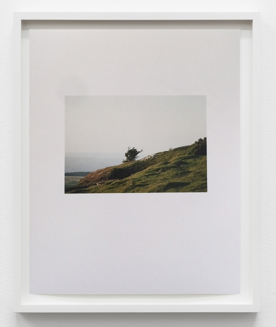 , 'Evening Mountain Sheep,' 2016, &editions