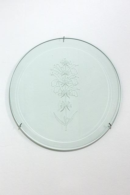 Anastasia Potemkina, 'Sálvia divinórum', 2019, Anna Nova Gallery