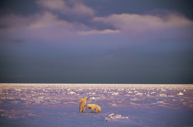 , 'The Dance,' , Paul Nicklen Gallery
