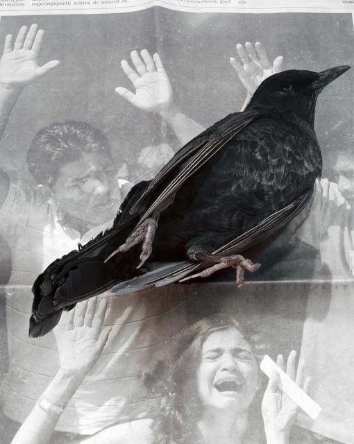 , 'Dead Bird,' 2008, Foam Fotografiemuseum Amsterdam