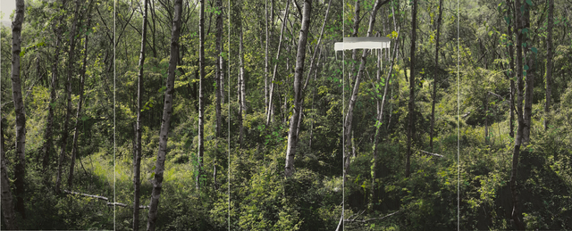 , 'Study of Green - White Birch A,' 2011, ONE AND J. Gallery