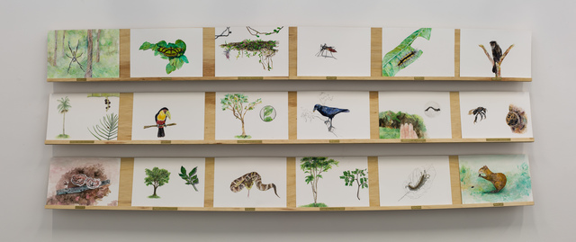 , 'Inventário de Fauna e Flora – Estudos sobre a terra  [Studies about The Earth: Inventory of Flora and Fauna],' 2016, Galeria Aura