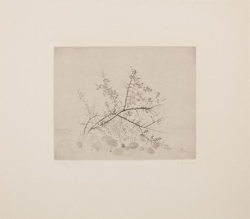 , 'Slanbuskar (Blackthorn Bushes),' 1976, Pucker Gallery
