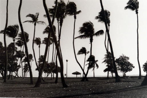 Christopher Makos, 'Palm Beach', 1987, Photography, Contemporary Fiber-Based Silver Gelatin Prints, Miller Gallery