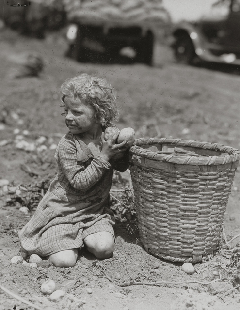 Lewis Wickes Hine, 'Child Picking Long Island Potatoes', ca. 1912, Photography, Gelatin silver print, Robert Klein Gallery