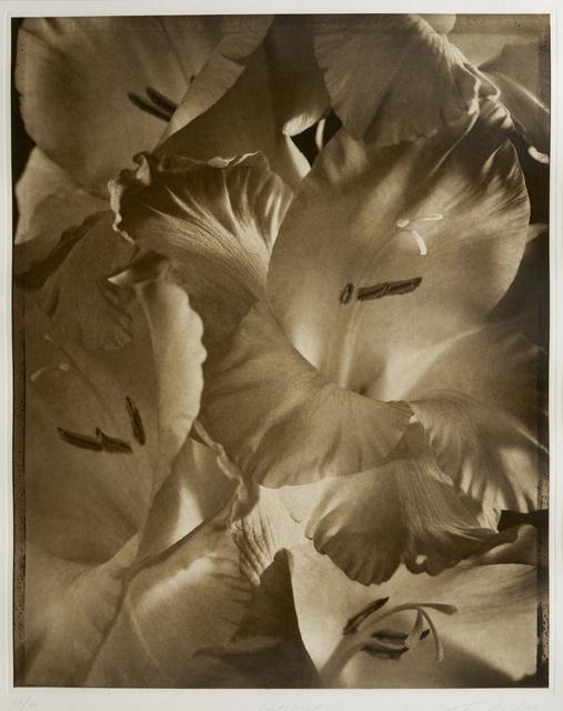 , 'Gladiola,' 1998, Vision Neil Folberg Gallery