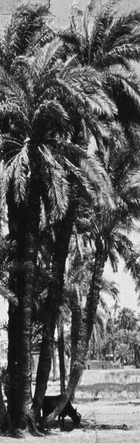 , 'Palm Tree,' 2015, BolteLang