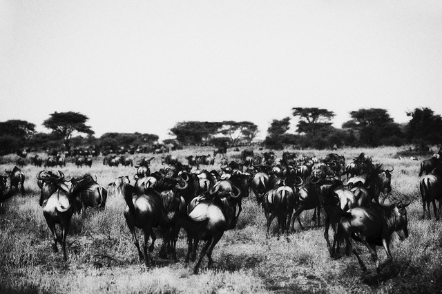, 'Great Migration,' 2016, Ostlicht. Gallery for Photography