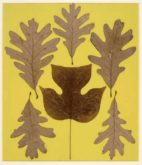 , 'Leaf Study IX,' c. 1940, ICA Boston