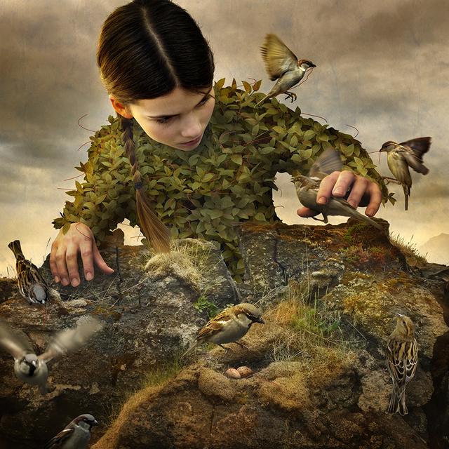 , 'Hidden Aviary,' 2017, photo-eye Gallery