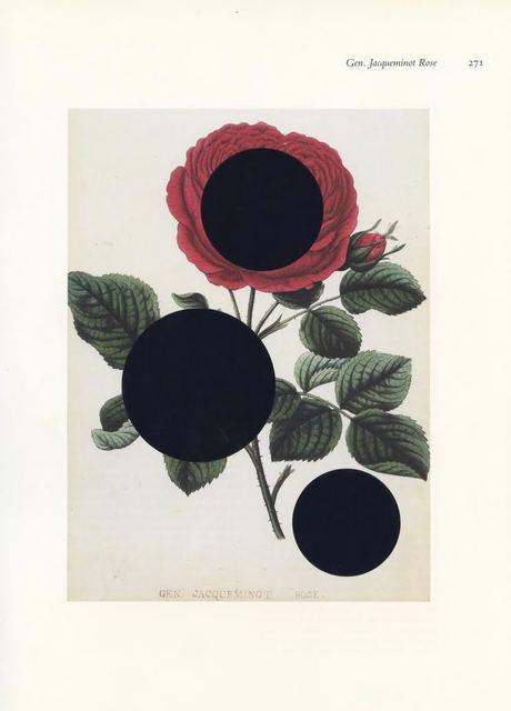 , 'Gen. Jacqueminot Rose,' 2016, Eric Buterbaugh Gallery