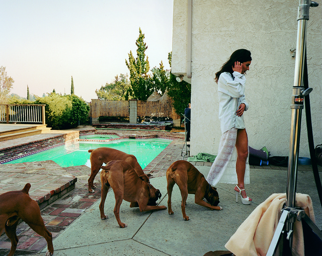 Larry Sultan, 'Boxer dogs, Mission Hills', 1999-2003, Alex Daniels - Reflex Amsterdam