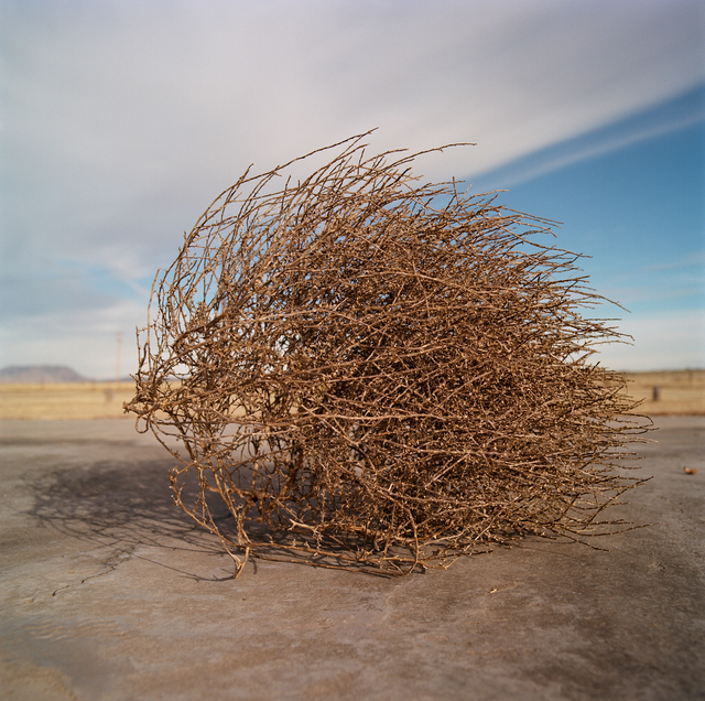 , 'Tumbleweed. 2018. Marfa, Texas.,' , Barry Whistler Gallery