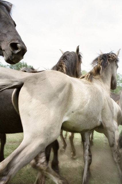 """Jitka Hanzlová, 'Untitled (Yearlings) from """"Horses""""', 2009, Mai 36 Galerie"""