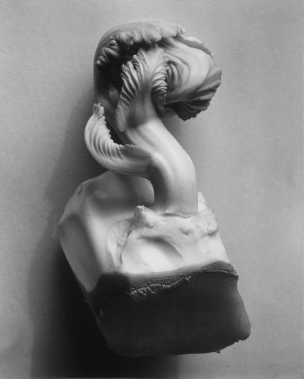 , 'Cabbage Fragment,' 1931, Robert Klein Gallery
