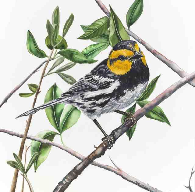 Carol Dawson, 'Golden Cheeked Warbler', 2019, Wally Workman Gallery