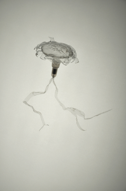 Laurent Lamarche, 'Translucida Organidée (échantillons 5)', 2009, Art Mûr