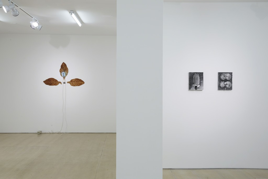 Installation view: Ordering Nature