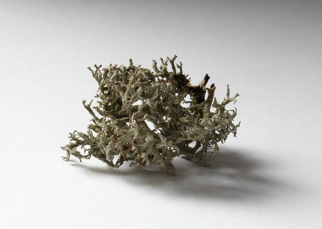 , 'Moss found in a dark drawer,' 2018, Marie Kirkegaard Gallery
