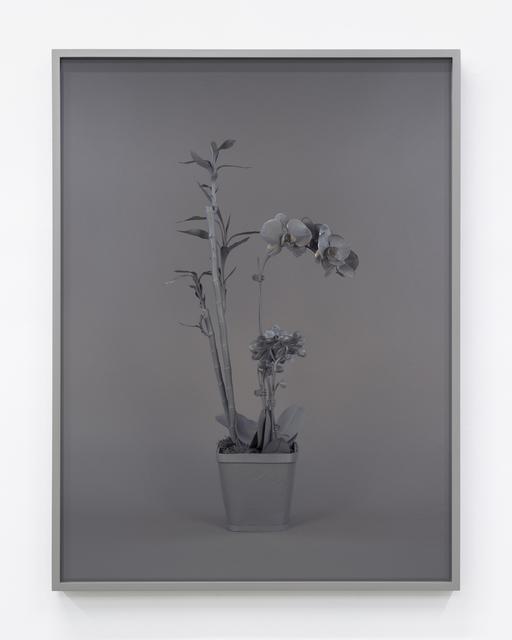 Stephanie Syjuco, 'Neutral Orchids (Phalaenopis + Dracaena sanderana 2)', 2016, Contemporary Art Museum St. Louis: Benefit Auction 2019