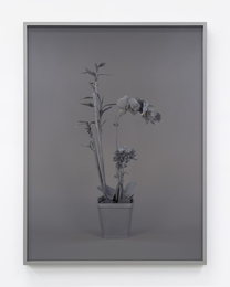 Neutral Orchids (Phalaenopis + Dracaena sanderana 2)