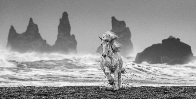 David Yarrow, 'White Horses, Iceland', 2018, Photography, Archival Pigment Photograph, Holden Luntz Gallery