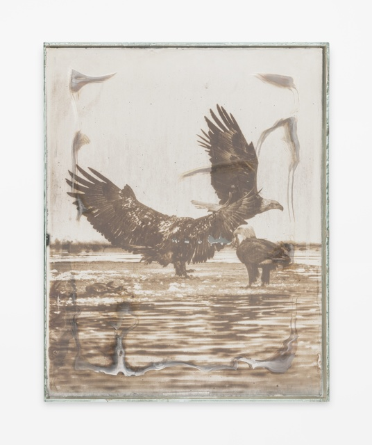 Matthew Brandt, 'Eagles 75B', 2017-2019, M+B