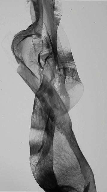 , 'Under Continual Revision,' 2017, Dominik Mersch Gallery