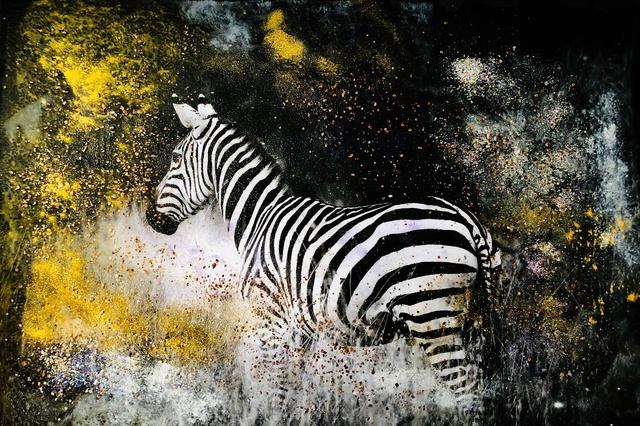 , 'Early Morning Zebra,' 2018, Isabella Garrucho Fine Art