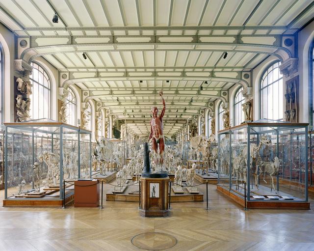 Richard Barnes, 'Flayed Man, MCA Paris', 2006, Headlands Center for the Arts: Benefit Auction 2019