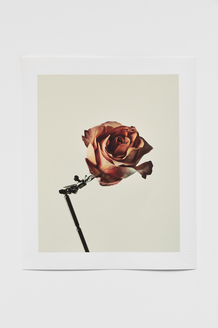 casper sejersen, 'Single Rose', 2020, Print, Pigment print on Hahnemuhle Photo Rag, Cob