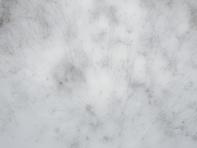 , 'Grass in Snow, New York,' 2013, C. Grimaldis Gallery