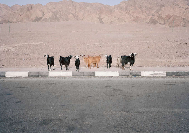 , 'Sinai (goats),' 2010, Dio Horia