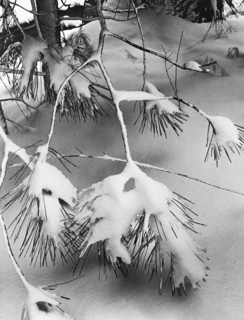 Ansel Adams, 'Branches in Snow, Yosemite National Park, California', ca. 1932, The Ansel Adams Gallery