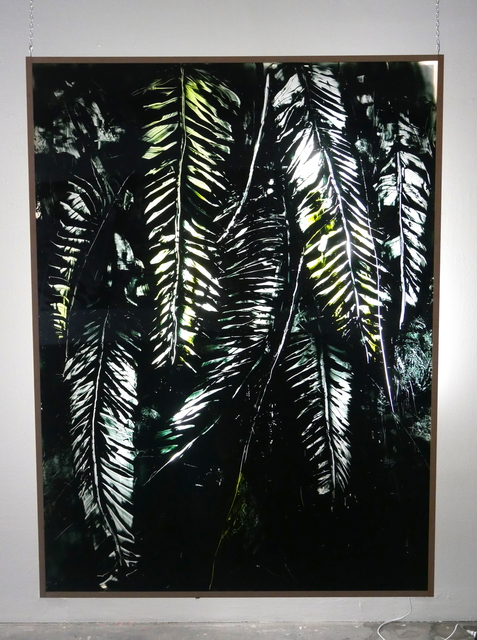 , 'Berlin Plant III,' 2016, Urban Spree Galerie