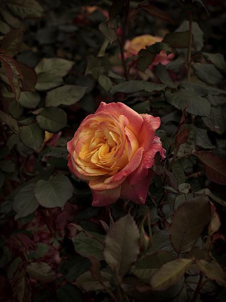, 'Bloom #8,' 2018, MARS