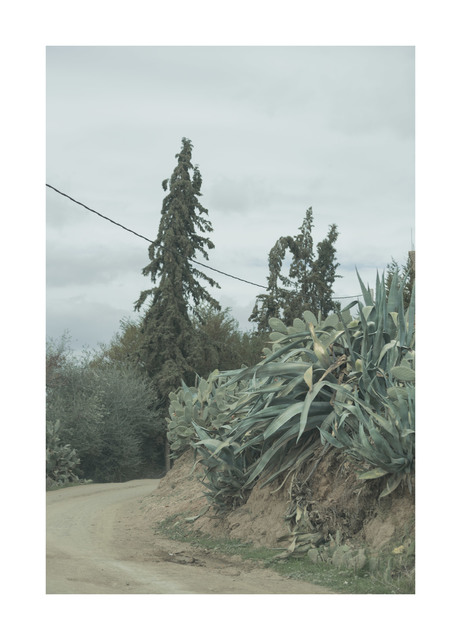 , 'Pines and Cactus,' 2018, Hans Alf Gallery