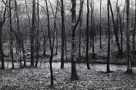 , 'Redding Woods #3, Redding, CT,' 1968, Pucker Gallery