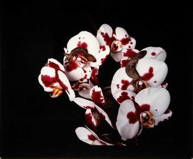 ", 'Untitled, from the series ""Flowers and Jamorinsky"",' 2005-2006, Ostlicht. Gallery for Photography"
