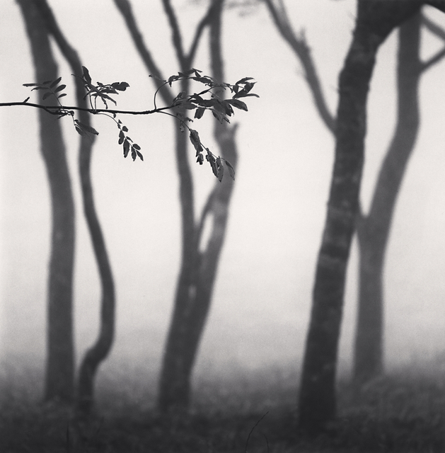 , 'Chikui Cape Trees, Muroran, Hokkaido, Japan,' 2002, G. Gibson Gallery