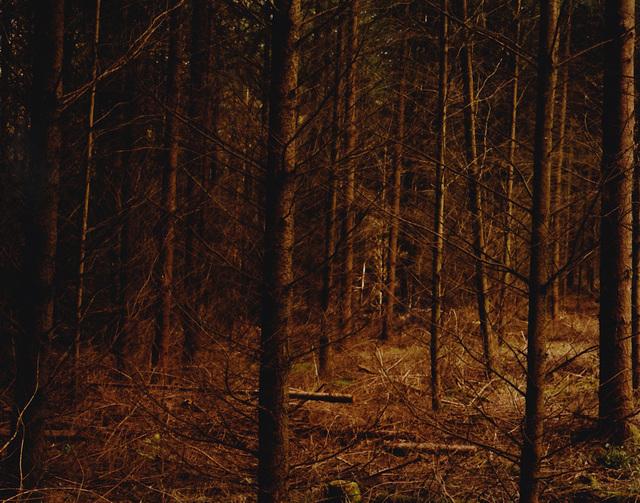 , 'Untitled #311h,' 2015, Anton Kern Gallery
