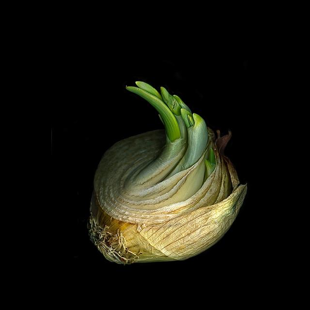 , 'Onion (Still Life),' , Carrie Haddad Gallery