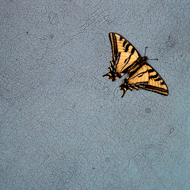 , 'TDTDC 16 (Swallowtail Butterfly),' 2009, photo-eye Gallery