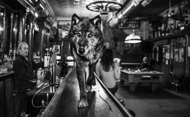 , 'Wolf of Main Street II ,' 2015, Isabella Garrucho Fine Art