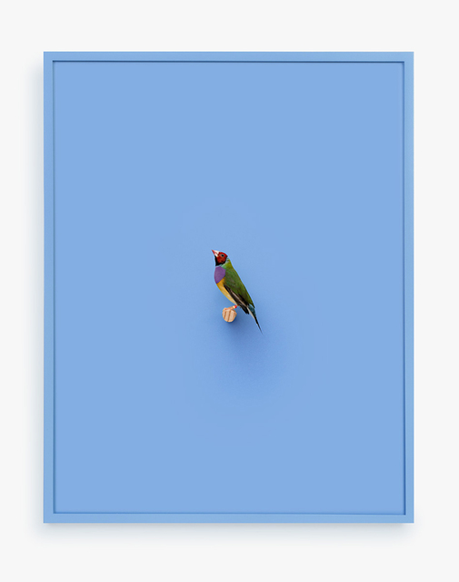 , 'Gouldian Finch (Ray of Power),' 2016, ClampArt