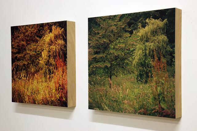 , 'St Helens Wood (Quartet),' 2013, GBS Fine Art